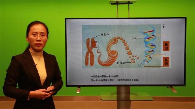 什么是基因